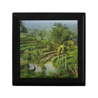 Bali - junge Terrassericefields und -palmen Erinnerungskiste