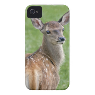Bambi BlackBerry-Case-Mate-Fall iPhone 4 Cover