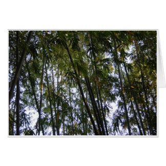Bambusbäume Grußkarte