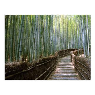Bambuswald in Kyoto Postkarte