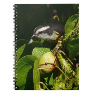 Bananaquit Vogel-Essentropische Natur-Fotografie Notizblock