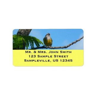 Bananaquit Vogel-und blauer Himmel-Fotografie Adressaufkleber