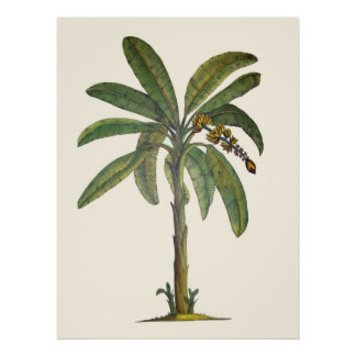 Tropische Kunst