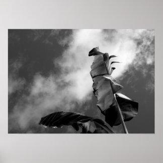 Bananen-Baum verlässt schwarze u. weiße Poster
