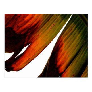 Bananen-Blatt Postkarte
