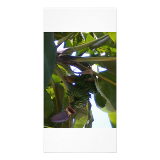 Bananen-Pflanzen Individuelle Photo Karte