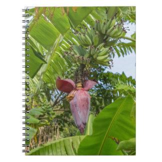 Bananenplantage in Sok Kwu fahler Lamma Insel Spiral Notizblock