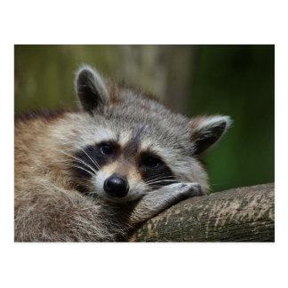 Bandit an Erholungniedlichem Raccoon Postkarte