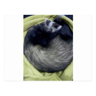 Bandit das Frettchen-Schlafen Postkarte