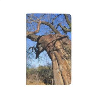 Baobab (Adansonia Digitata), Kruger Taschennotizbuch