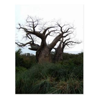 Baobab-Baum-Postkarte Postkarte