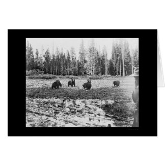 Bären in Yellowstone Nationalpark 1922 Karte