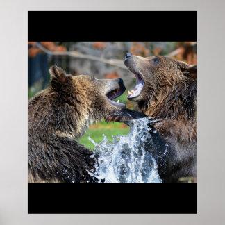 Bärn-Bärn-Tier-Wasser-Spritzen-Tier-Natur