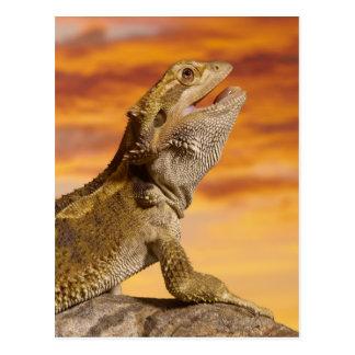 Bärtiger Drache (Pogona Vitticeps) auf Felsen, Postkarte