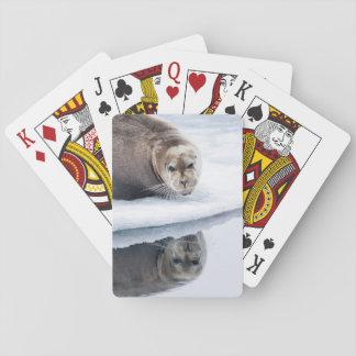 Bärtiges Siegel auf Eis, Norwegen Spielkarten
