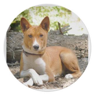 Basenji Hund Teller