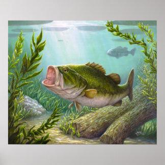 Bass-Fische Poster