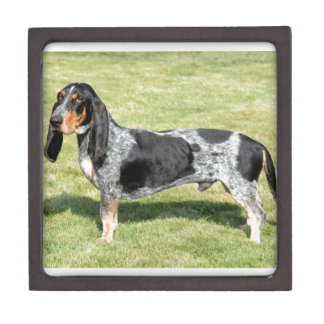 Basset Bleu de Gascogne Dog Schachtel