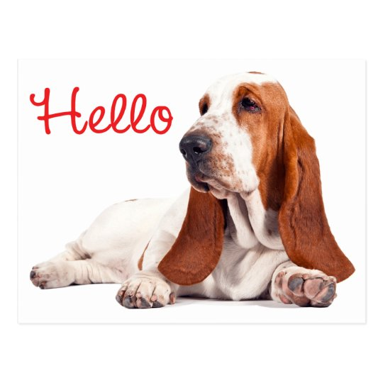 basset hound h ndchen rot hallo das an sie denkt postkarte zazzle. Black Bedroom Furniture Sets. Home Design Ideas