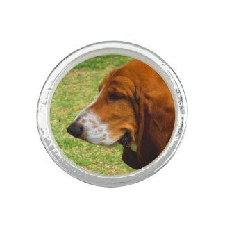 basset-hound.png ringe