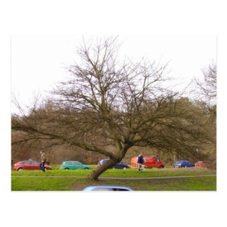 Baum 2 postkarte