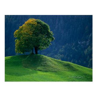 Baum auf einem Hügel Postkarte