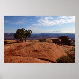 Baum aus roten Felsen an Canyonlands Nationalpark Poster