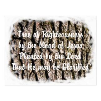 Baum-Barkennaturbibel basierte christliche Postkarte