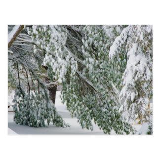 Baum bedeckt mit starkem Schneefälle Postkarte