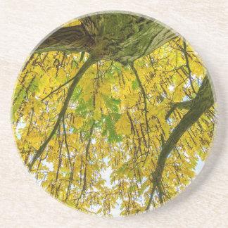Baum-Blätter und -niederlassungen von unterhalb im Getränkeuntersetzer