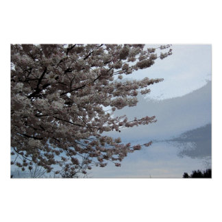 Baum-Blüte Poster