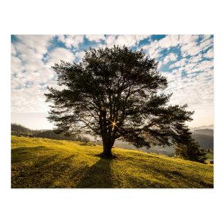 Baum, Dämmerung. Schöne Naturlandschaft Postkarte