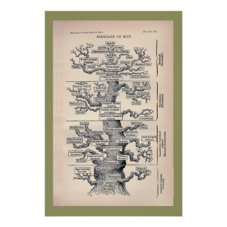 Baum des Lebens/des Stammbaums des Mannes Poster