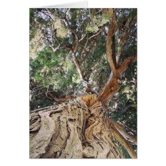 Baum, deutscher Geburtstag Karte
