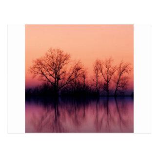 Baum-düsteres Holz Postkarte