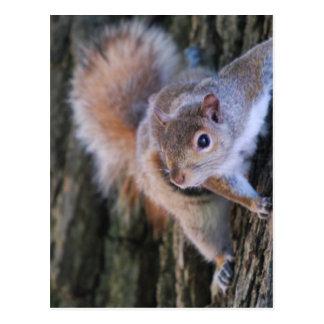 Baum-Eichhörnchen-Postkarte Postkarten