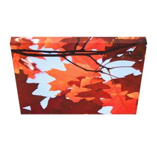 Baum-Foto des roten Ahorns Leinwanddruck