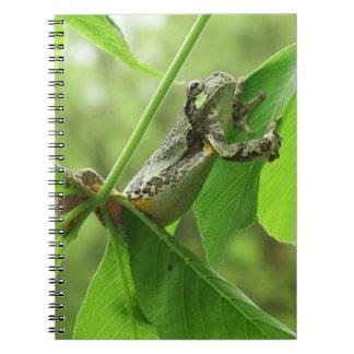 Baum-Frosch, der an hängt Spiral Notizblock