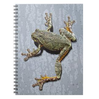 Baum-Frosch, der Fenster nach dem Regen anhaftet Notizblock