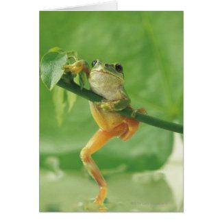 Baum-Frosch Karte