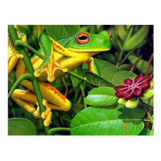 Baum-Frosch Postkarte