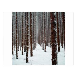 Baum furchtlose Icey Aussicht Postkarte