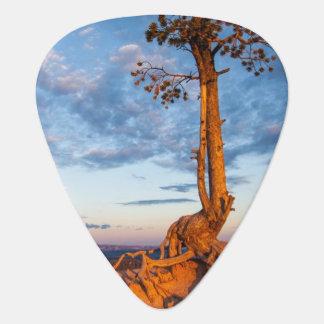 Baum haftet Leiste, Bryce Schlucht-Nationalpark an Plektron