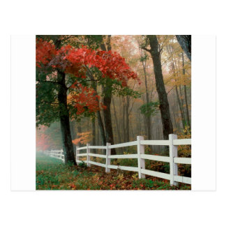 Baum-Herbst-Pracht Postkarte