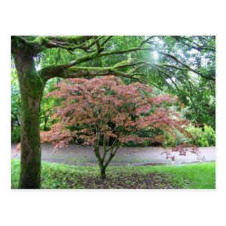 Baum im Blüte Geschwätz-Schloss, Irland Postkarte