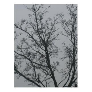 Baum im Nebel Postkarten
