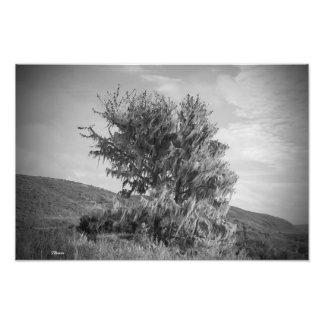 Baum in B&W Fotodruck