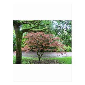 Baum in der Blüte neben dem Geschwätz-Schloss, Postkarte