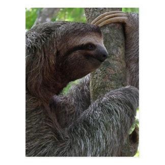Baum-kletternde Trägheits-Postkarte Postkarte