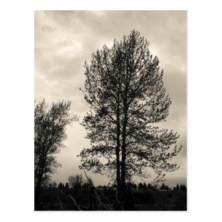 Baum mit sahniger Himmelpostkarte Postkarte